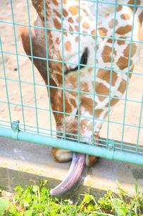 動物園の写真素材 [FYI00598484]