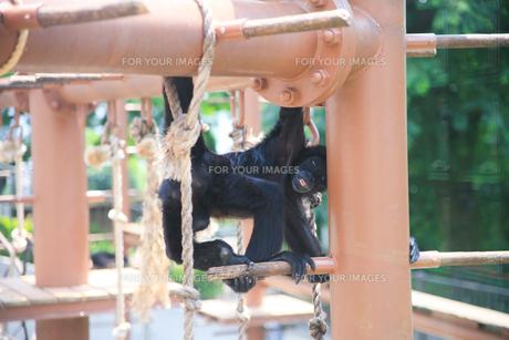 動物園の写真素材 [FYI00598485]