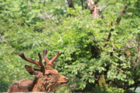 動物園の写真素材 [FYI00598486]