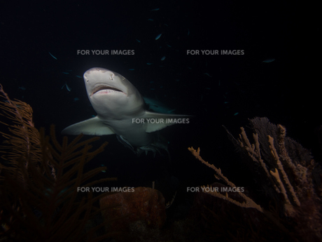 underwaterの素材 [FYI00599929]
