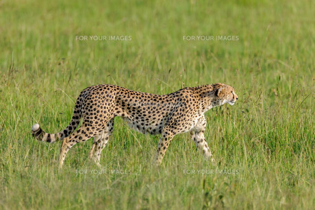 africaの写真素材 [FYI00602536]