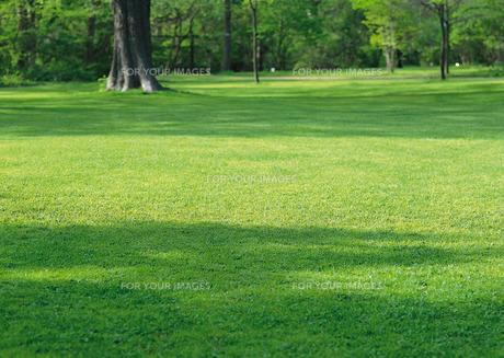 芝生の素材 [FYI00602884]