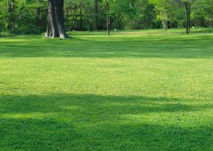 芝生の写真素材 [FYI00602884]