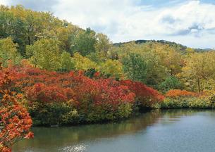 五色温泉の紅葉の写真素材 [FYI00602903]