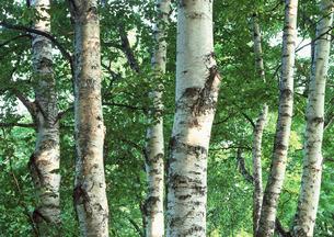森林の素材 [FYI00602936]