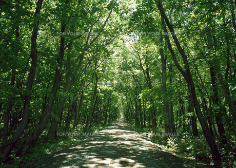 森林の素材 [FYI00602941]