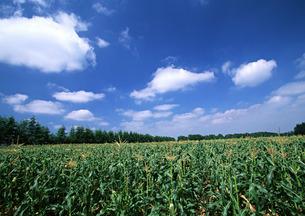 畑の写真素材 [FYI00603011]