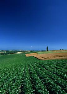 豆畑の写真素材 [FYI00603014]