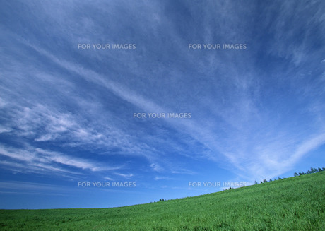 牧草地の写真素材 [FYI00603018]