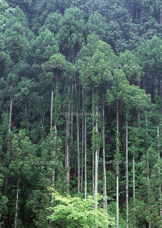森林の素材 [FYI00603098]