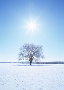 雪原の写真素材 [FYI00603123]