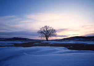 雪原の写真素材 [FYI00603124]