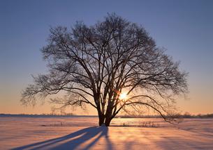 樹木の写真素材 [FYI00603127]