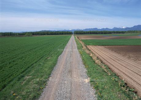 畑の写真素材 [FYI00603155]