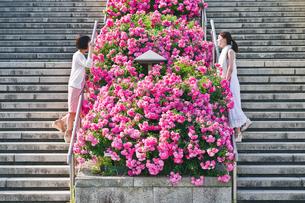 花壇越しに会話する女性の写真素材 [FYI00603554]