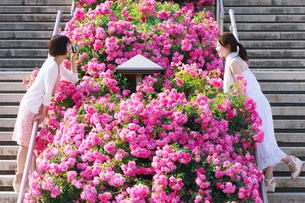 花壇越しに会話する女性の写真素材 [FYI00603555]