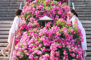 花壇越しに会話する女性の写真素材 [FYI00603558]