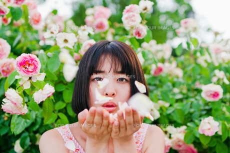花びらを吹く女性の素材 [FYI00603601]