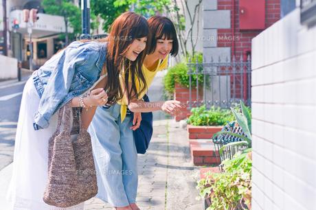 植物を指差す女性の素材 [FYI00603693]