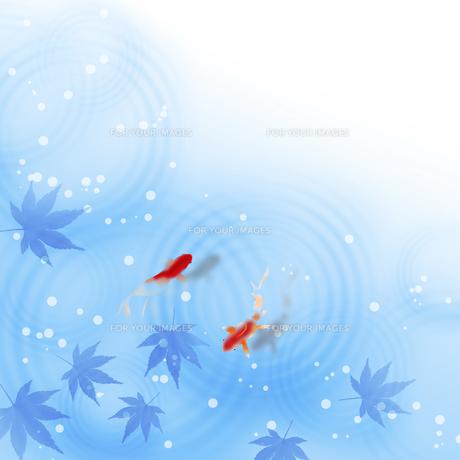 お中元 暑中見舞 残暑見舞 のイラスト素材 [FYI00603914]