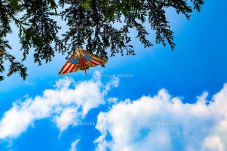 木に引っかかる凧の写真素材 [FYI00604221]