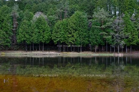 池に写り込む森林の写真素材 [FYI00604350]
