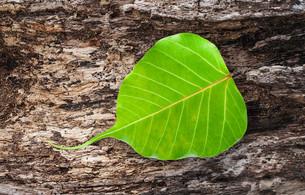 leafの素材 [FYI00610147]