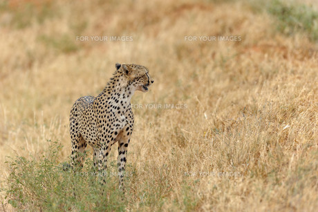 africaの写真素材 [FYI00611709]