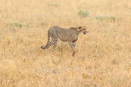 africaの写真素材 [FYI00612589]