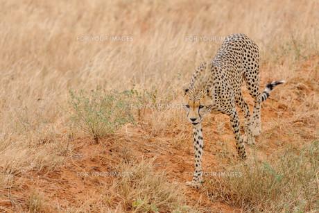 africaの写真素材 [FYI00612591]