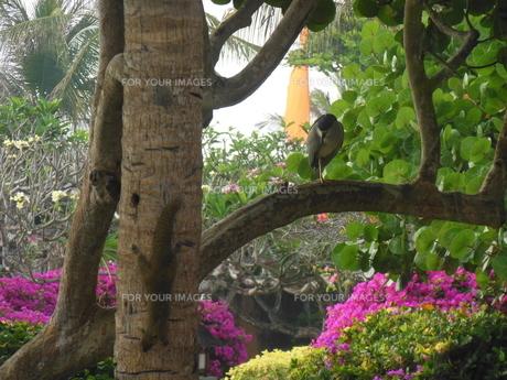 バリ島の庭でリスのかくれんぼの写真素材 [FYI00613404]