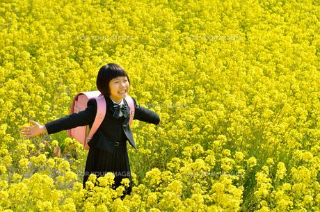 菜の花畑に立つ女の子(ランドセル、フォーマルスーツ)の写真素材 [FYI00618295]