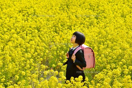 菜の花畑に立つ女の子(ランドセル、フォーマルスーツ)の写真素材 [FYI00618298]