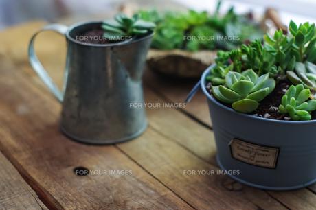 多肉植物の寄植えの写真素材 [FYI00618375]