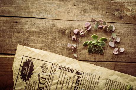 多肉植物のカット苗の写真素材 [FYI00618377]
