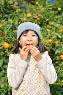 みかん狩りを楽しむ女の子の写真素材 [FYI00618702]