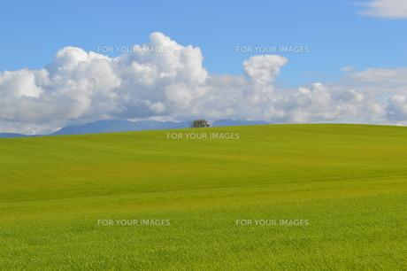 美瑛 草原 雲の写真素材 [FYI00618975]