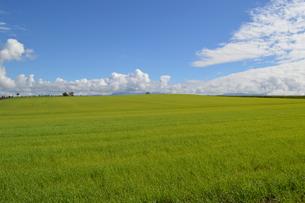 北海道 美瑛 草原と青空の写真素材 [FYI00618978]