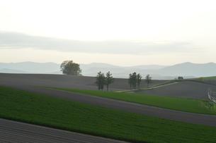 北海道 美瑛 マイルドセブンの丘の写真素材 [FYI00618983]