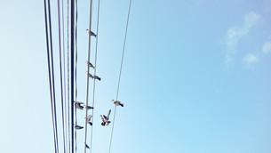 電線にとまる鳥の写真素材 [FYI00619100]