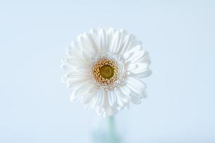 花の写真素材 [FYI00619118]