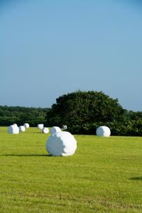 緑の牧草畑と梱包された牧草ロールの写真素材 [FYI00619284]