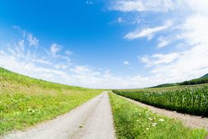 夏の田舎道の写真素材 [FYI00619287]