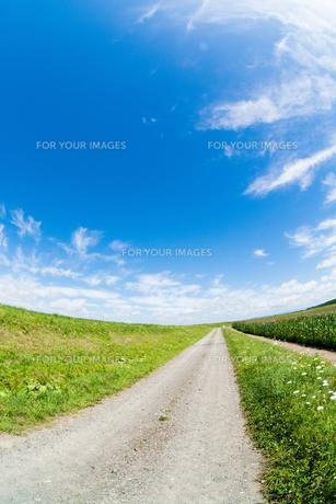 夏の田舎道の写真素材 [FYI00619288]