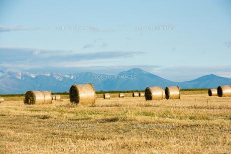 麦畑に並ぶムギロールと夏山の写真素材 [FYI00619296]