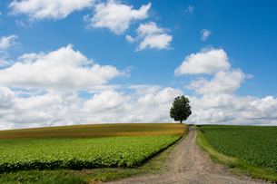 畑の中を通る砂利道と夏の空の写真素材 [FYI00619297]
