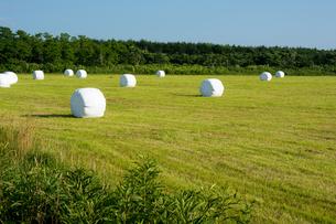 牧草ロールが広がる畑の写真素材 [FYI00619304]