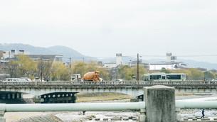 京都鴨川 賀茂大橋の交通の写真素材 [FYI00619330]