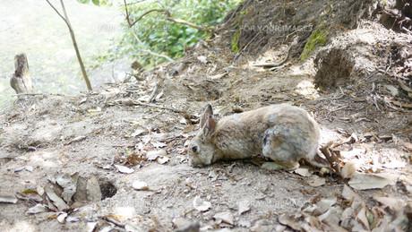 野ウサギの写真素材 [FYI00619394]