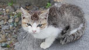 ノラ猫のまなざしの写真素材 [FYI00619396]